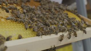 De proWIN-bijenwagen - Project 1 - Uw BTW-voordeel voor het goede doel.